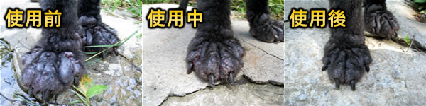 中華民國保護動物協會─小黑親身體驗(毛囊蟲感染)