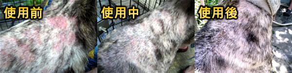 中華民國保護動物協會-虎妹親身體驗實例(濕疹)